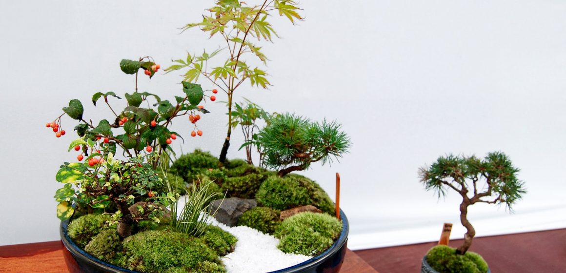 Tendenze casa 2021: le mini piante, dai bonsai a quelle grasse