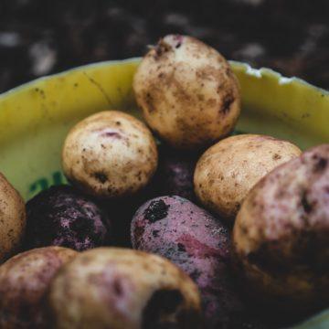 Patate con germogli: sono mangiabili?